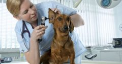 Finding the Perfect Veterinary Services