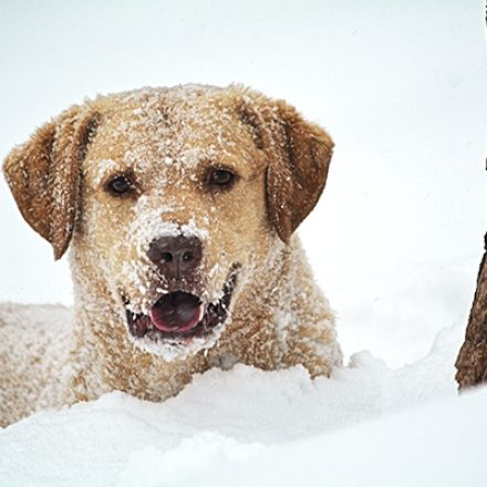Secure Your Pet in Cold Winter Weather – Tips