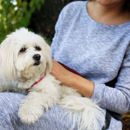 The most effective method to Choose the Best Pet Sitter