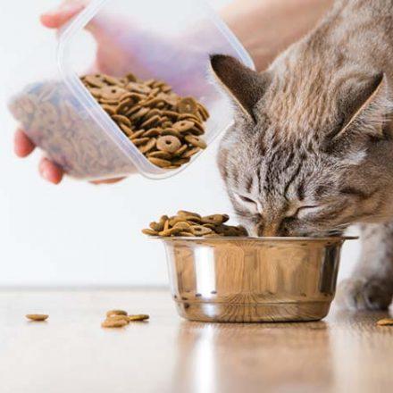 Top Cat Food Brands