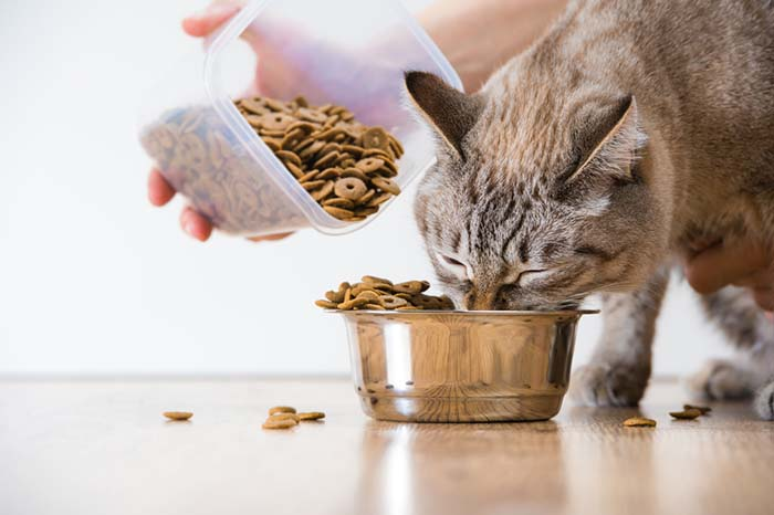 Top Cat Food Brands