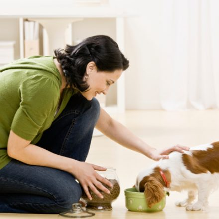 Gauge Your Pet Care Options