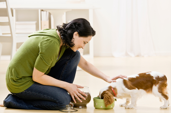 Gauge Your Pet Care Options