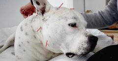 5 Reasons to Consider Veterinary Acupuncture