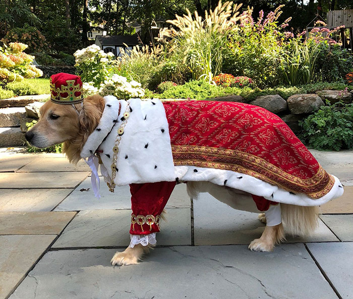 Communicating The Love For Animals Through Pet Costumes