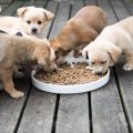Canine Food – Food Supplements