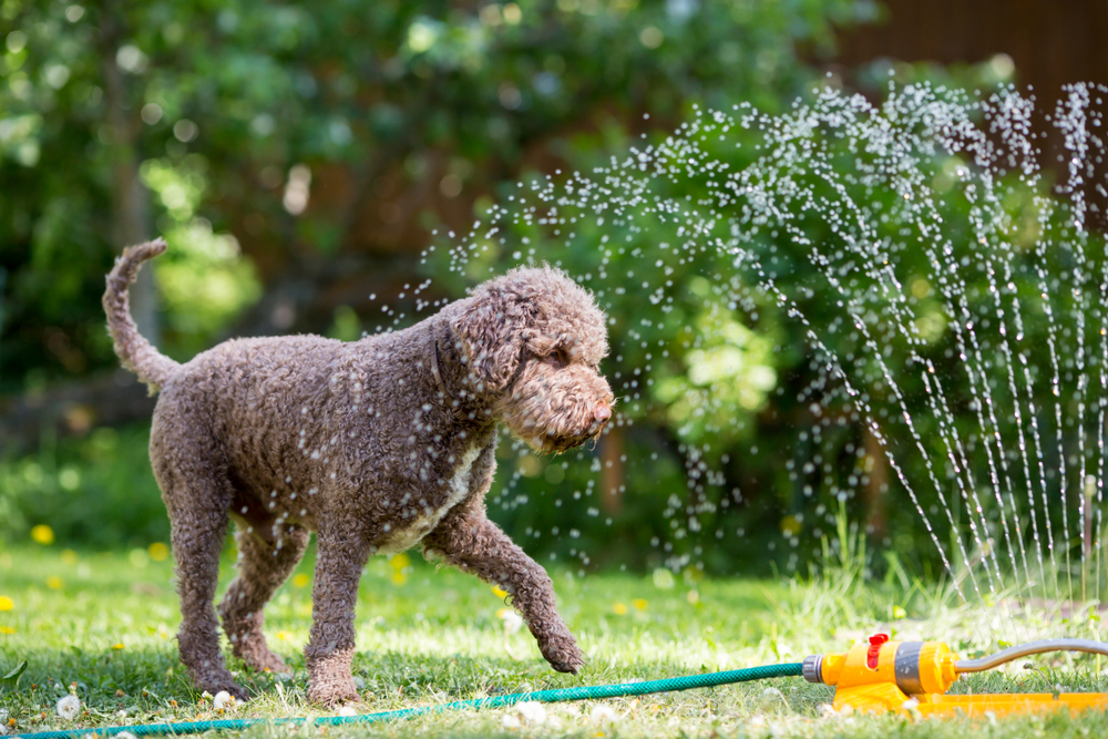 4 Summer Pet Care Tips