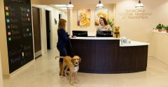 An Understanding of Veterinary Clinics