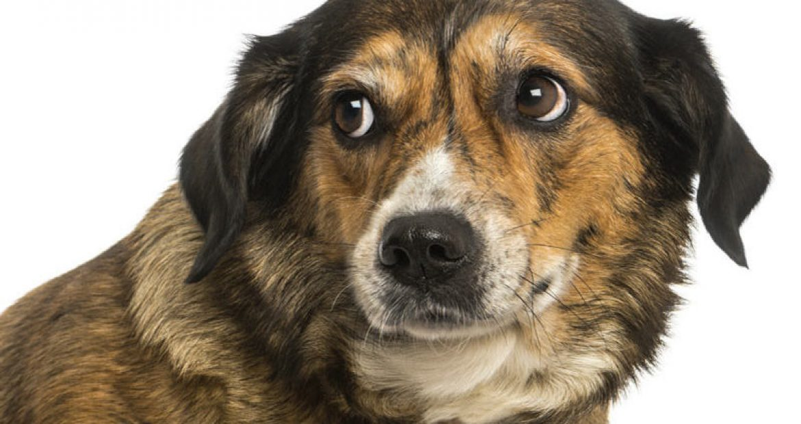 Help for Your Anxious Dog