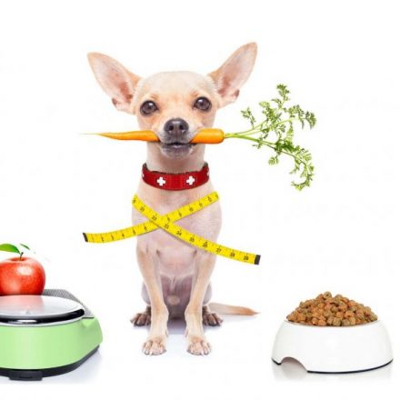 Helping Your Obese Dog Slim Down