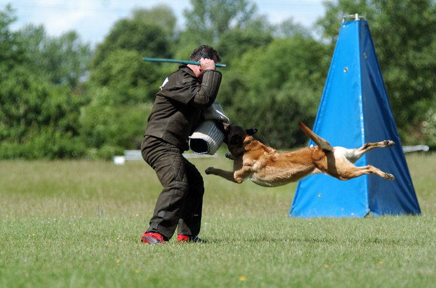 What are the Advantages of Guard Dog Training?
