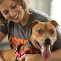 Which are the prominent reasons for adopting a pet?