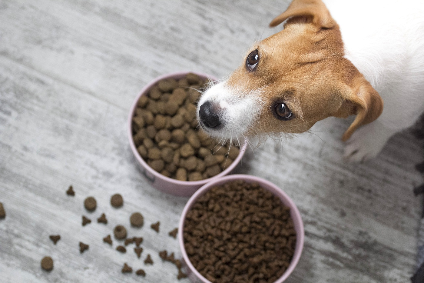 Four Signs It's Time to Change Pet Food