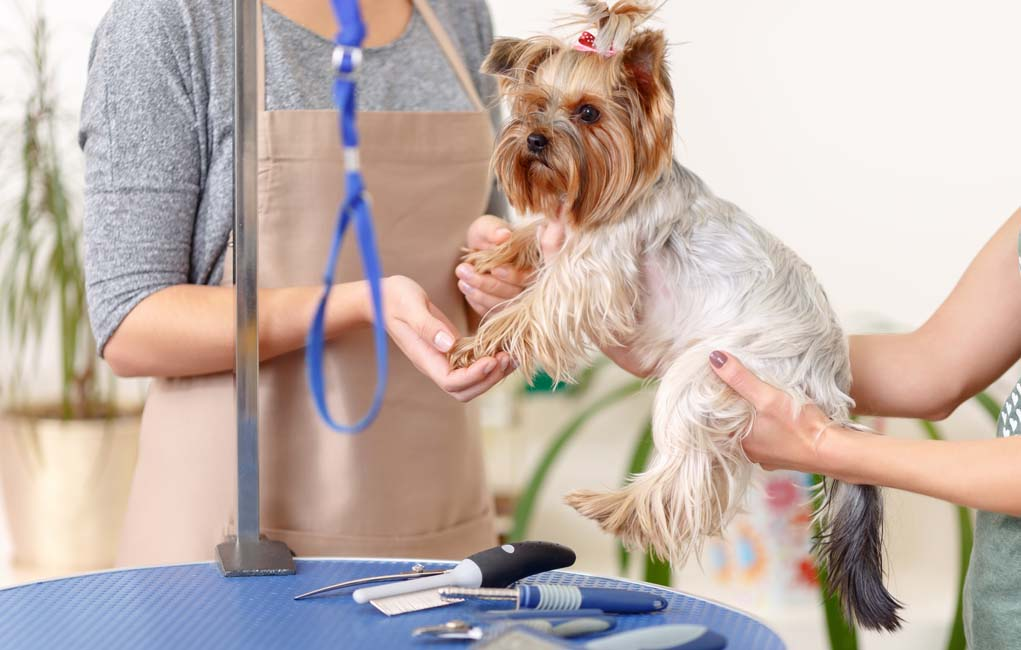 The Right Way to Save on Pet Care Services
