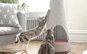 Scratching Post- An Essential Tool for Cats