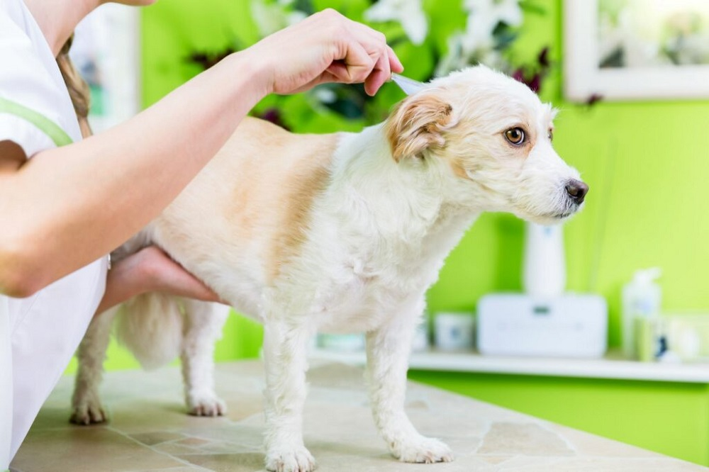 5 Quick Ideas To Protect Your Pet Cats & Dogs From Flea