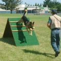 4 Reasons to Enrol Your Pet in a Dog Training Class
