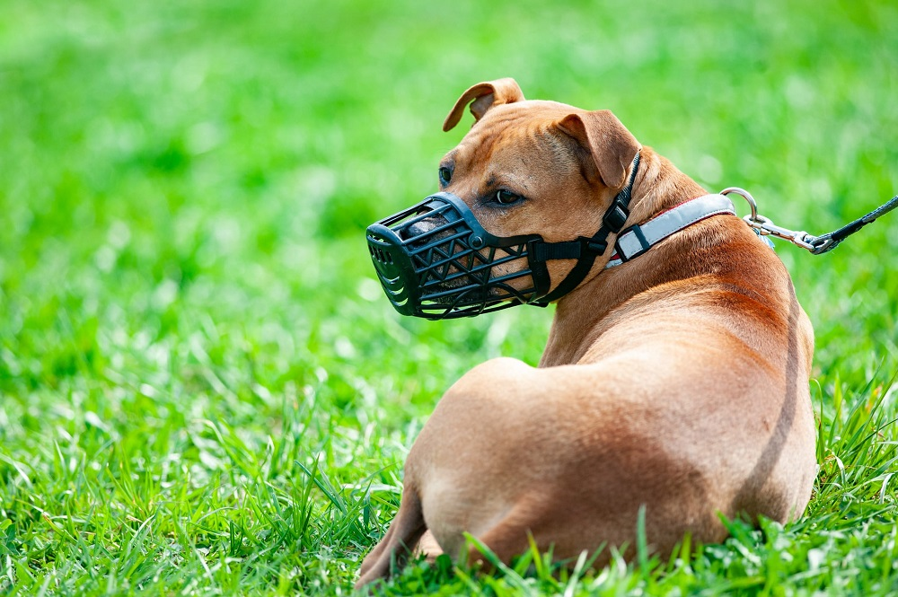 What Are The Reasons For Choosing Dog Muzzles From Authentic Manufacturers?
