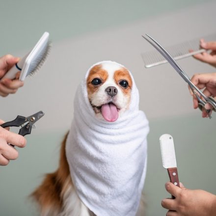 Why Should You Groom Your Dog at Home?