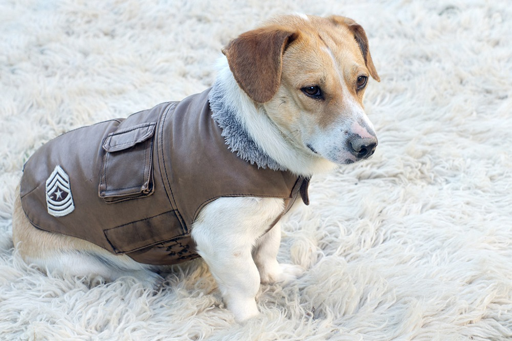 Does Your Pet Need A Dog Coat?