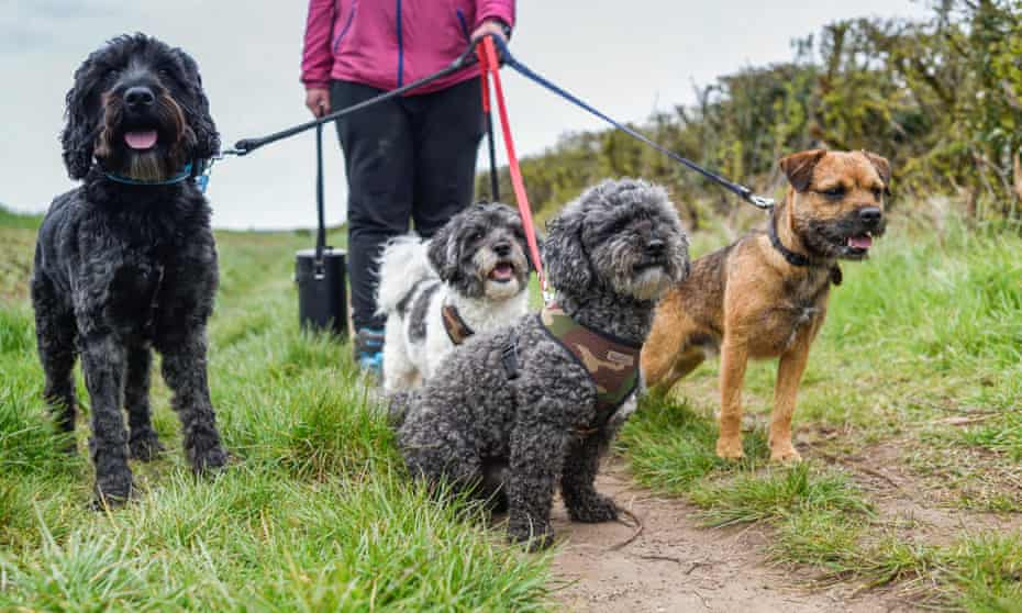 5 tips for preparing your pooch for dog daycare