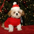 How To Choose The Best Dog Christmas Sweater?